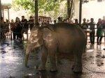 В Киевский зоопарк привезли слоненка