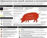 Хозяйствам, которые потеряли свиней из-за африканской чумы, начали выплачивать компенсации