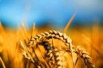 Иордания закупила в Украине 200 000 тонн пшеницы