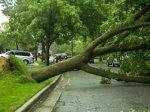 На Крещатике дерево упало сразу на семь автомобилей