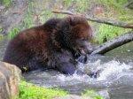 На базе отдыха в Подмосковье медведь напал на 14-летнюю девочку
