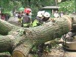 В Днепропетровске ураган снес десятки деревьев, а молнии превратили ночь в день
