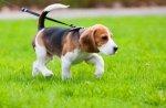В Киевском парке Оболонь откроется зона выгула для собак